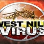 Mosquito season means it is time to vaccinate horses against West Nile Virus