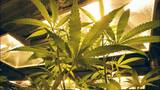 Marijuana industry may soon be able to co-locate