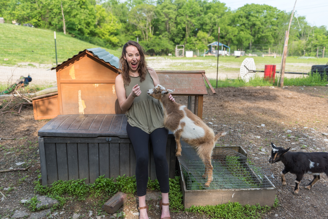 The farm also has baby goats that love to say hello / Image: Mike Menke // Published: 6.6.19