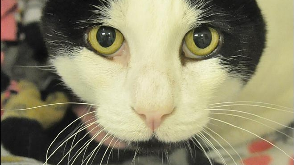 10 adoptable pets from Woodinville's Homeward Pet
