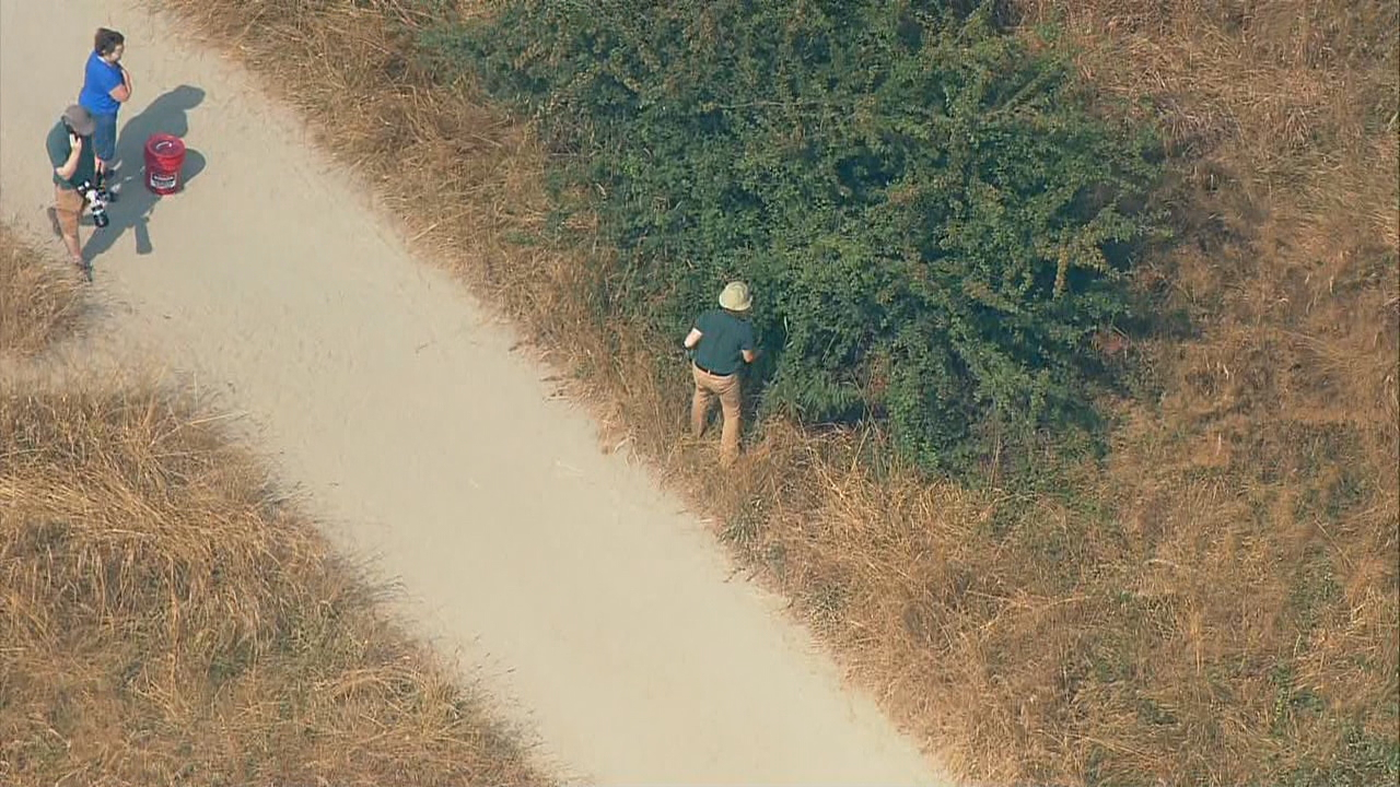 Zoo officials search for a corn snake in Seattle's Discovery Park (Photo: KOMO News/Air 4)