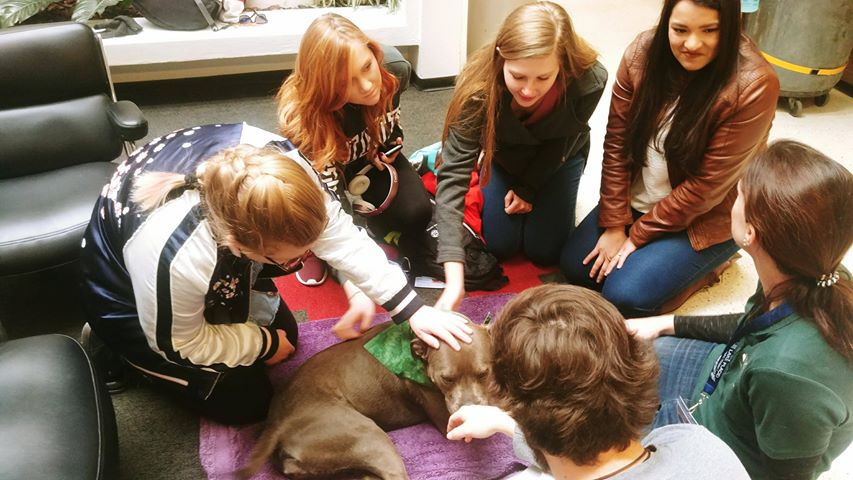 "Registered teams from Therapy Animals of Utah visit the University of Utah for ""Pause for Paws"" on Wednesday. (Photo: Brian Morris / KUTV)"