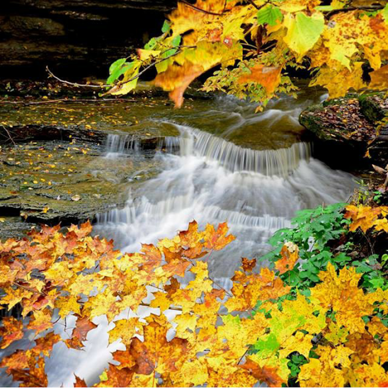 PLACE: Clifty Falls State Park in Indiana / DISTANCE: 80 miles southwest of Cincinnati, less than a two-hour drive / The signature waterfalls of Indiana's Clifty Falls State Park are often like delicate bridal-veil mists in the fall, but still stunning when surrounded by brilliant fall foliage. The park is located near Madison, IN with entrances on State Roads 56 and 62. / Image courtesy of Indiana Office of Tourism Development // Published: 10.19.19