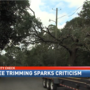 "Neighbors complain Alabama Power ""Butchered"" live oaks"