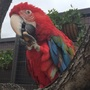 Henry Doorly Zoo asking for help to find missing macaw