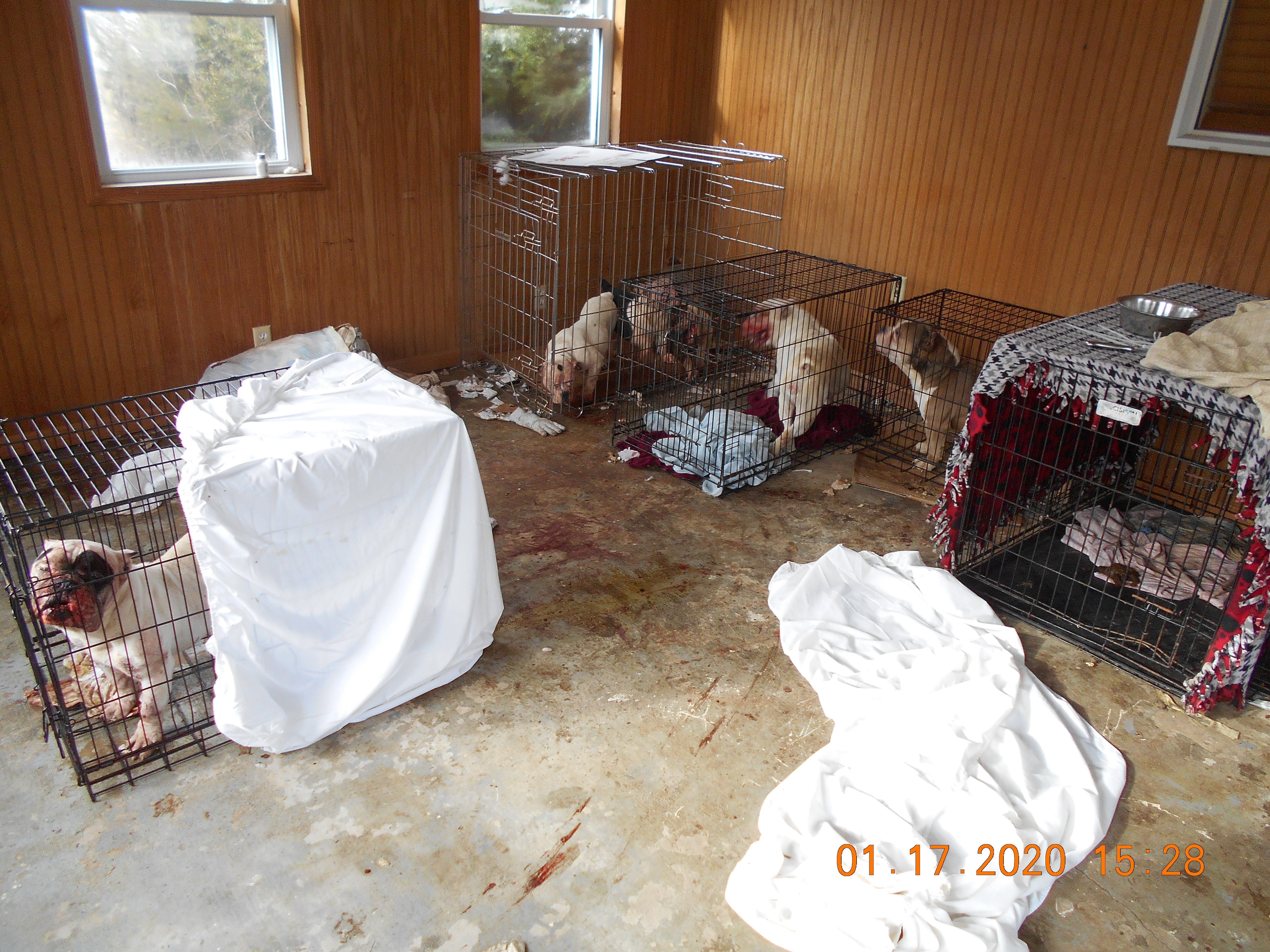 SPCA Executive Director Katie Timber said the dogs were stuck in cages for up to 18 hours a day. (WWMT/ Courtesy of SPCA Southwest Michigan)