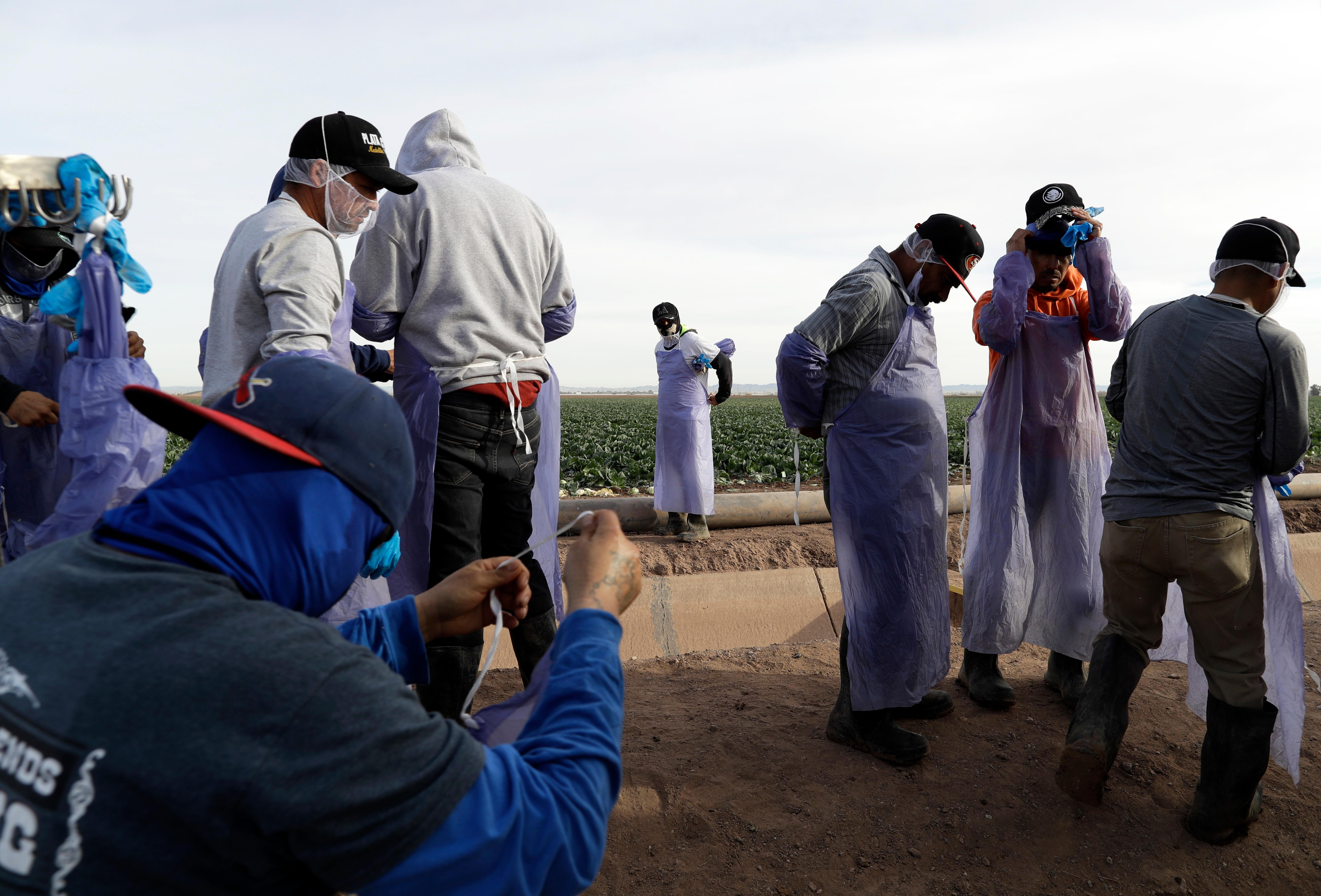 "In this March 6, 2018 photo, farmworkers prepare after a break while harvesting cabbage in a field outside of Calexico, Calif. For decades, cross-border commuters have picked lettuce, carrots, broccoli, onions, cauliflower and other vegetables that make California's Imperial Valley ""America's Salad Bowl"" from December through March. As Trump visits the border for the first time as president on Tuesday, the harvest is a reminder of how little has changed despite heated rhetoric in Washington. (AP Photo/Gregory Bull)"