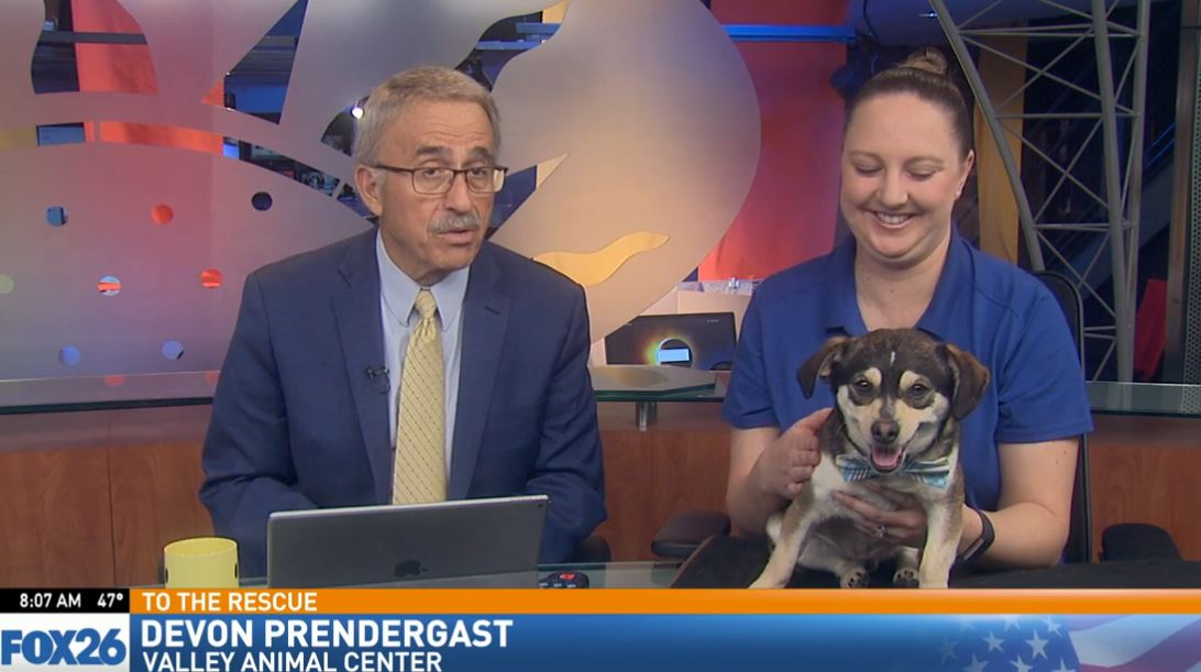 Devon Prendergast from Valley Animal Center visited Great Day with a dog looking for a good home