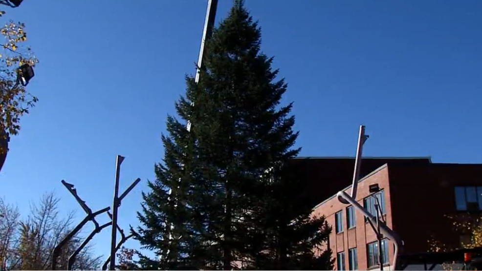 auburn puts up its christmas tree - How To Put Up A Christmas Tree