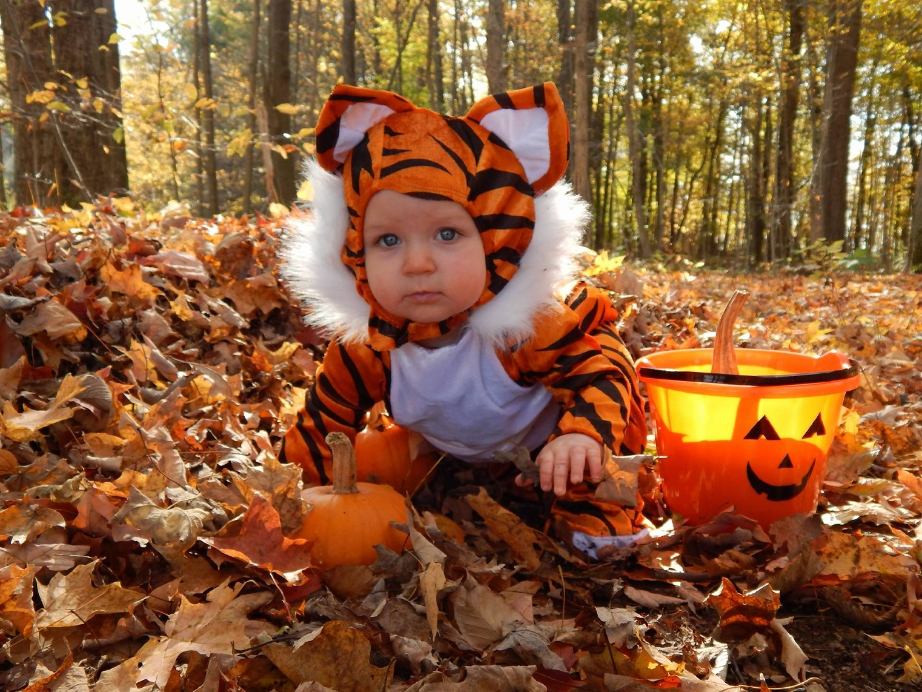 This little tiger cub Laura was submitted by Amy Burke