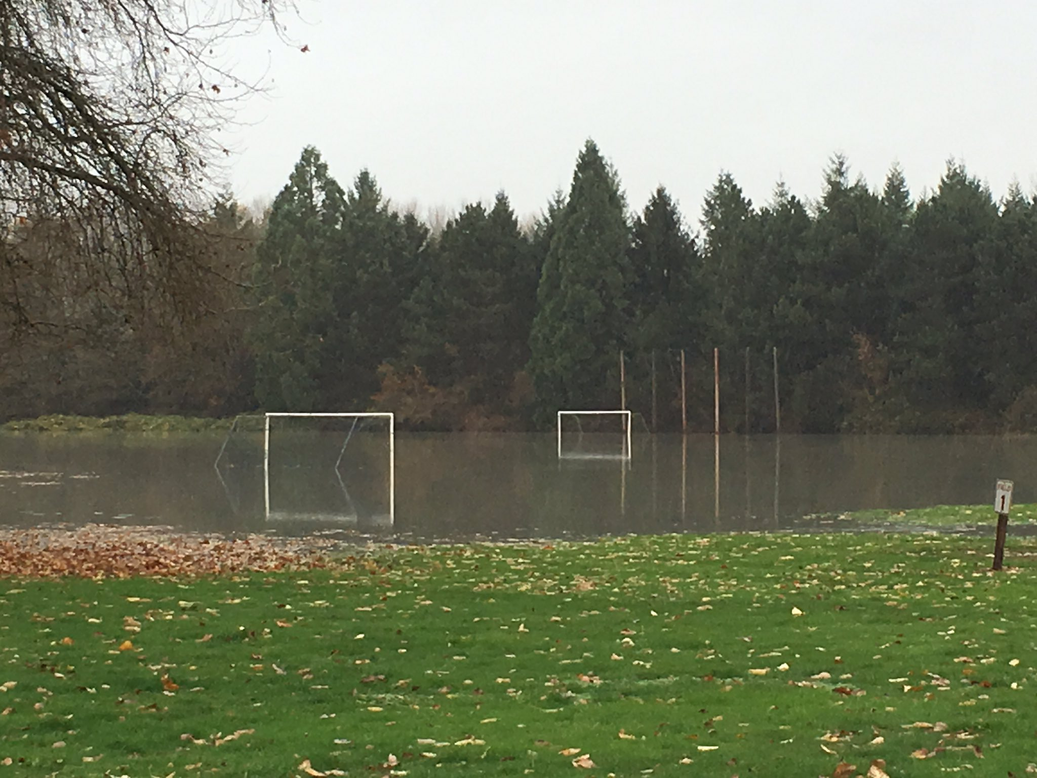 Water from the Stillaguamish River floods Twin Rivers Park in Arlington. (KOMO Photo){&amp;nbsp;}<p></p>