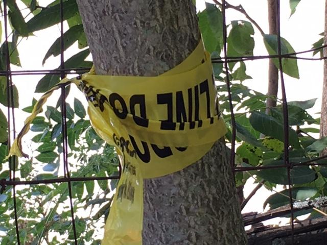 Crime tape was up around the scene where Josh Stebbins was found dead. (Photo credit: WLOS staff)