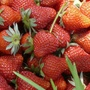 Strawberries take center stage in Van Buren County