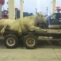 Viral photo shows cow strapped to trailer