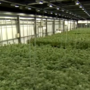 Tulsa business owners voice support for medical marijuana proposal