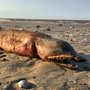 Mysterious creature washes ashore on Texas beach