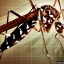 Eastern Equine Encephalitis found in Onslow County horse
