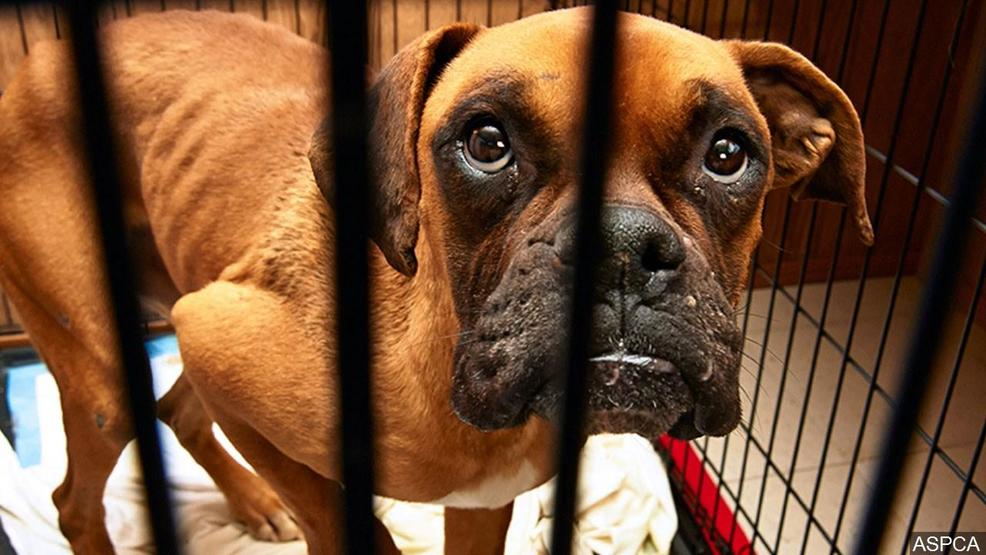 Tennessee lawmakers examine bill enhancing punishment for repeat animal cruelty offenders