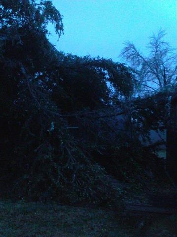 Wake up to a tree crashing down in our backyard at 4 AM