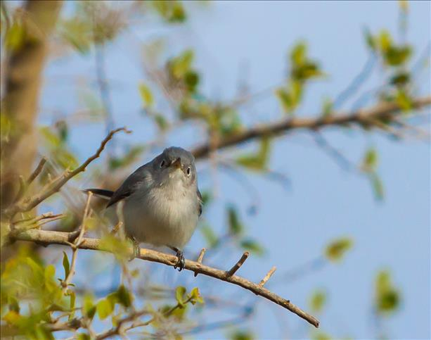 <a  href=&quot;http://share.valleycentral.com/Media/View/3299793&quot;>Mockingbird</a>