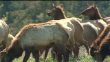 Neighbors say drones may be harassing elk at wildlife preserve