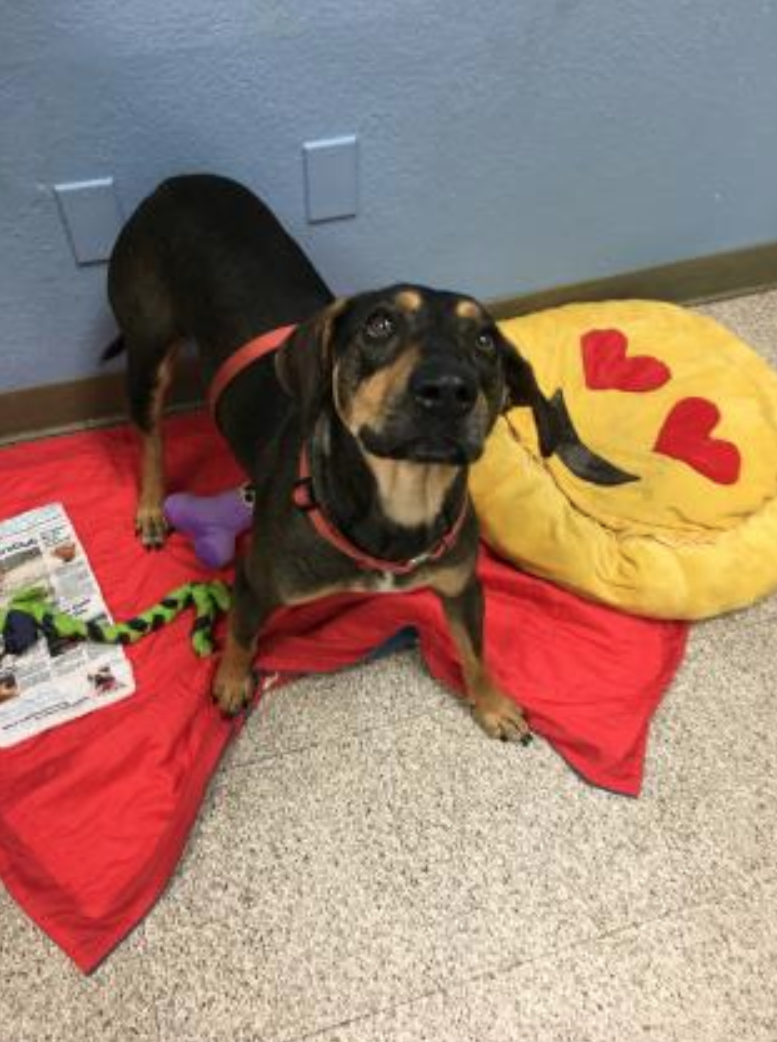 Meet Tex! This 1-year-old Hound Mix is looking for adventure, and is always up for some fun. Tex gets along well with everyone he meets, but no kitty cats please. He LOVES to play in the water, and is happy personality is sure to bring a smile to your face. More info on paws.org. (Image: PAWS)