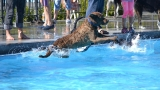Photos: Have you seen any pups happier than at See Spot Splash?