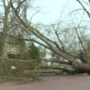 Fallen tree blocks road, hits power lines in Adena