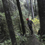 State Land Board votes to sell Oregon's oldest state forest