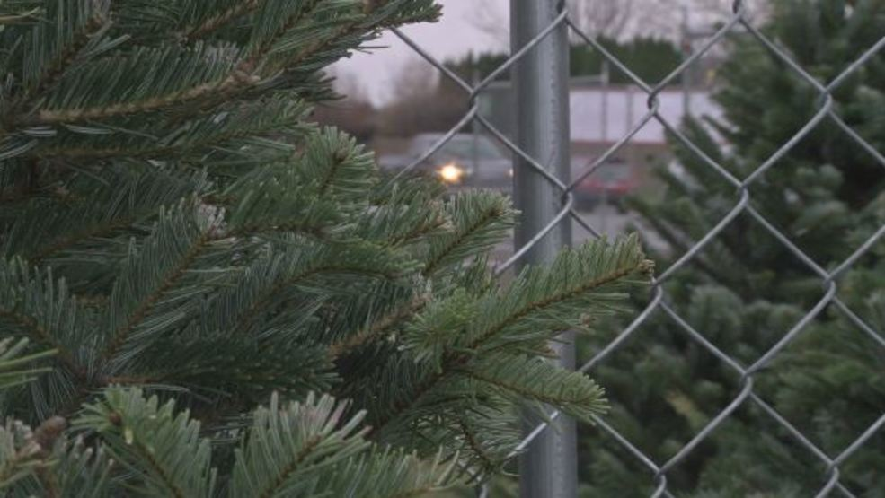 odf invasive pest brought into oregon on christmas trees could