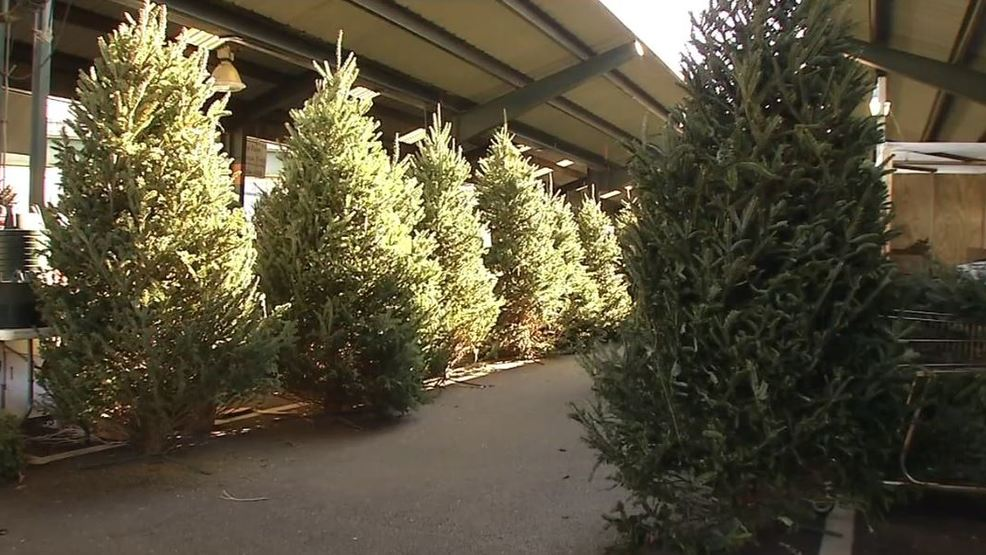 The 38th annual Big Brothers Sisters Christmas tree sale begins Saturday in Huntington and Ashland, Ky., a news release from the organization said. of Tri-State selling fresh