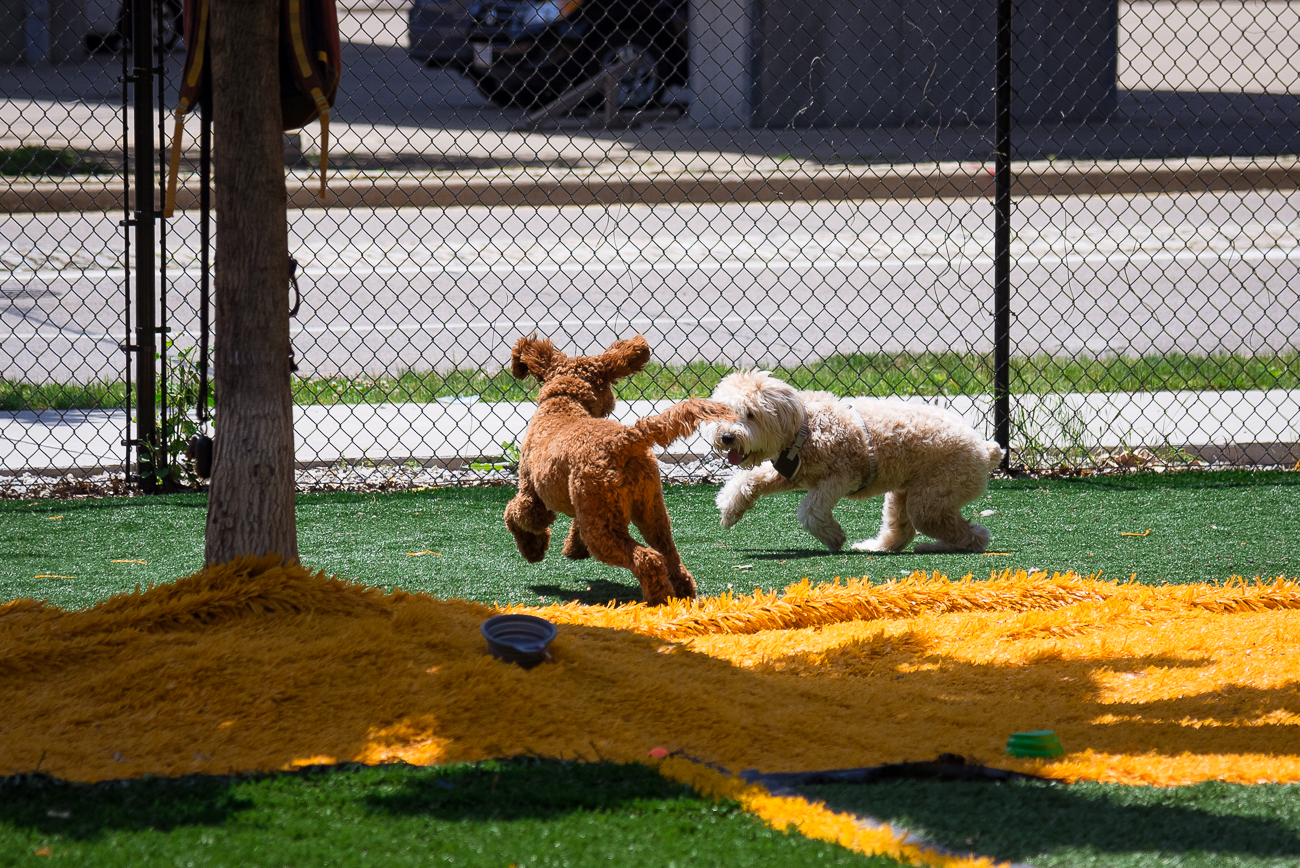 Dogs can run and play without being in danger of nearby traffic. The entire area is fenced in. / Image: Phil Armstrong, Cincinnati Refined // Published: 5.29.18