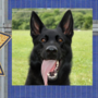 Hamilton Co. Sheriff's Office mourns passing of K-9 Deputy Zorro