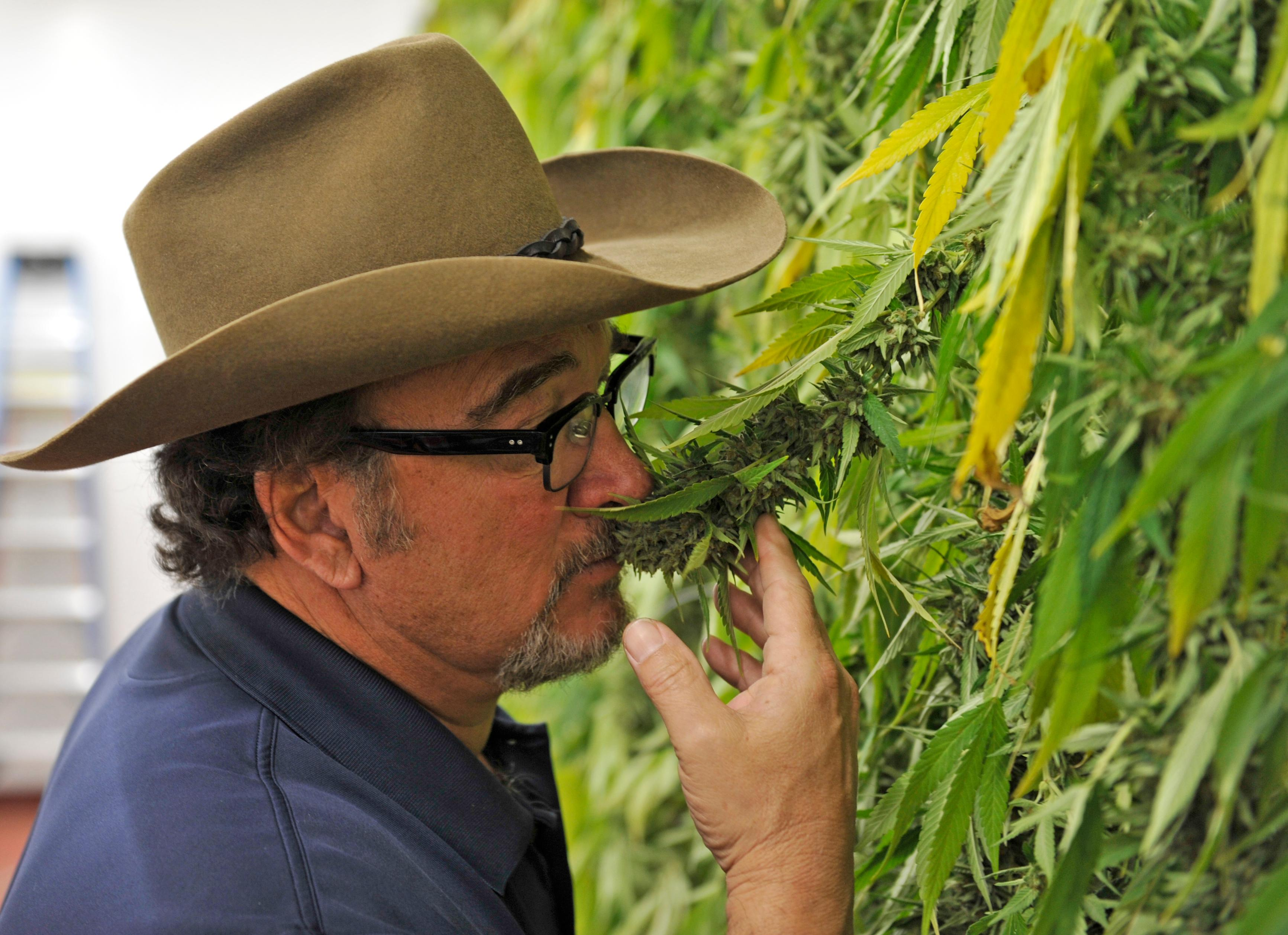 Jim Belushi smells a plant at his pot farm on the Rogue River on Monday. Jamie Lusch / Mail Tribune