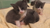 Man gets probation for leaving kittens on I-495