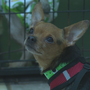 Dogs rescued from Rhea puppy mill ready for adoption in Chattanooga