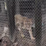 PETA urges HCPD to investigate Myrtle Beach roadside zoo