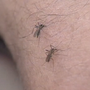 3 confirmed cases of West Nile virus in northern Kentucky