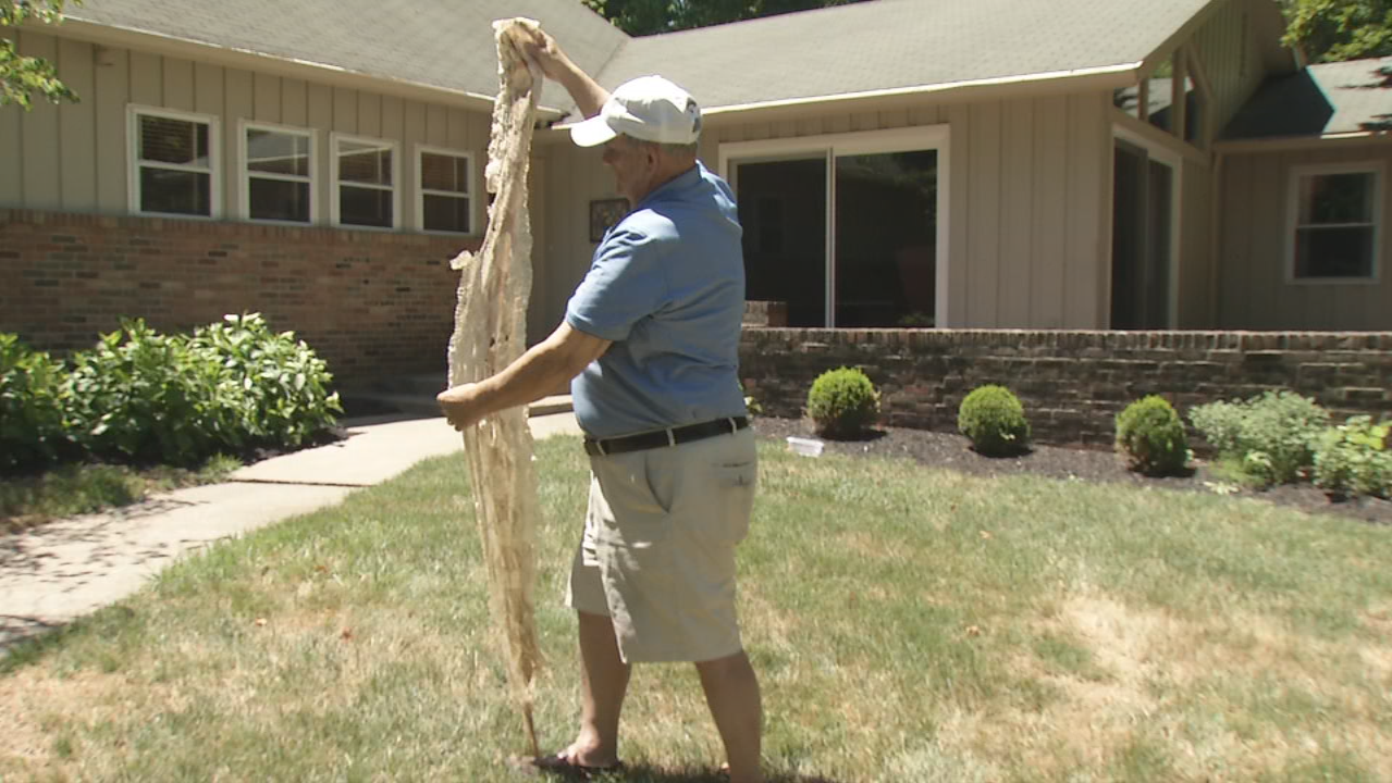 Jerry Smedley of Springfield shows shed skin of boa constrictor he found while cleaning his pool. (WKEF/WRGT)