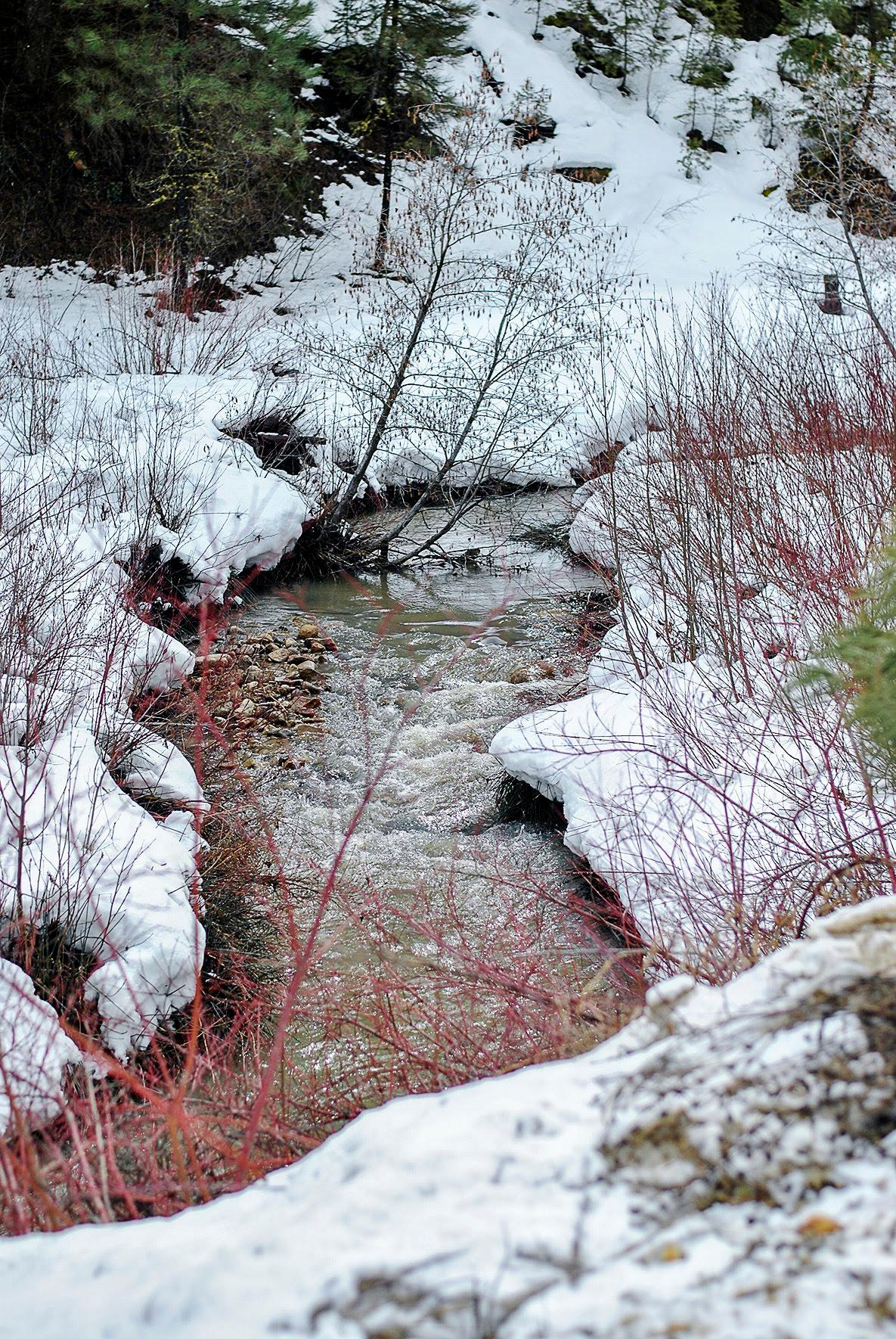 "Camilla Stuck, Grade 10 Honorable Mention, Mountain View High School: ""This picture was taken just a few feet away from Highway 21 on a road called Grimes Creek. I spent most of my time as a kid in this area, where I like to sit on rocks and listen to the gurgling of the water. This picture shows how detailed the water looks and how the water leads the eye into the forest and beyond."""
