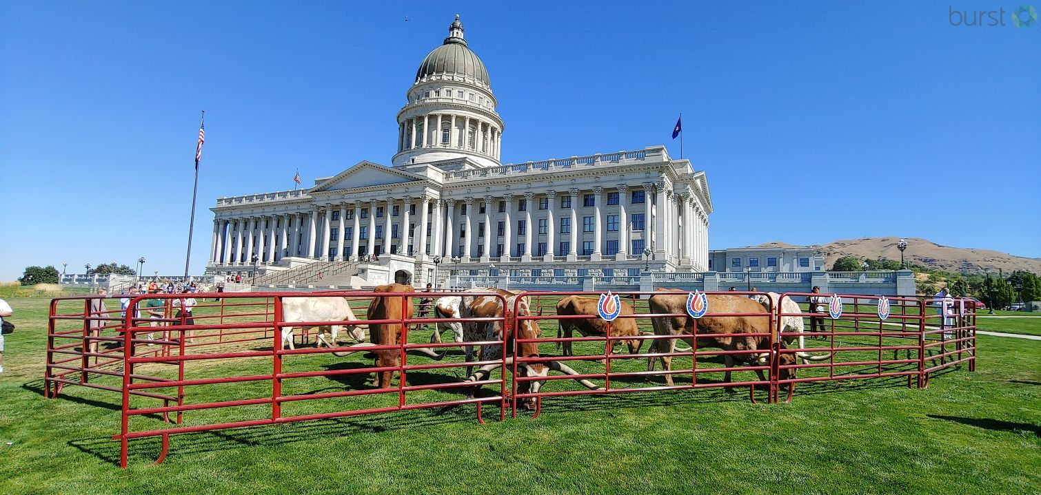 Gov, Gary Herbert kicked off rodeo week with a cattle drive on the south lawn of the State Capitol on Tuesday. (Photo: KUTV)