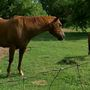 Increasing hay prices negatively affecting horse rescues