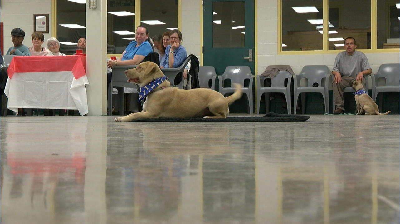 New Leash on Life is the name of the dog training program several of them took part in over the last nine weeks. Dogs who have been trained by inmates showed off what they learned to the delight of those in attendance. (Nate Belt, NewsChannel 12 photo)