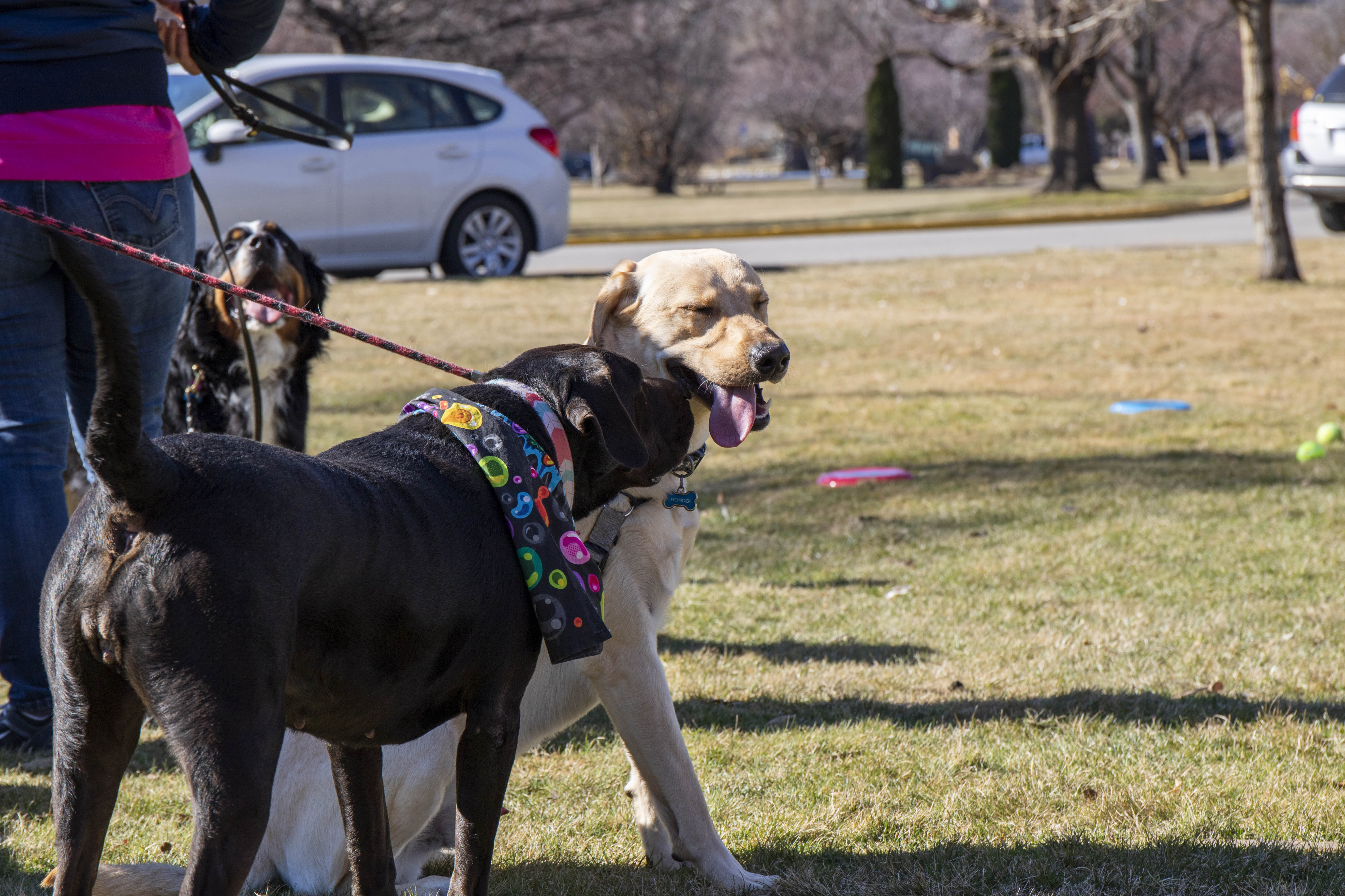 With TreeFort taking place next week, different forts have started around Boise. On Saturday in Ann Morrison, Park PetFort brought dog lovers and their puppy pals to a hangout and puppy party. TreeFort will be in full swing next week. (Photos by Axel Quartarone){ }