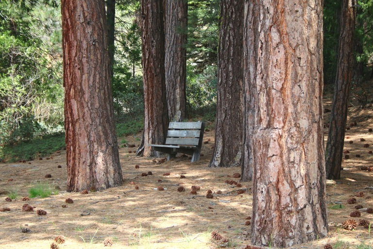 A place to relax under the trees at Sequoia National Park 6/20/17 (Photo by Trina Stull)