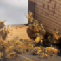 Millions of Yakima bees heading to California for almond season