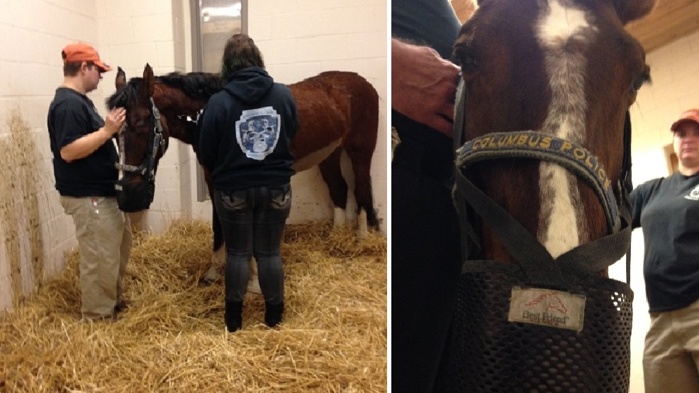 Willie, who passed at 24, was an 11-year veteran of the Columbus Police Mounted Unit. (Credit: Columbus Division of Police)