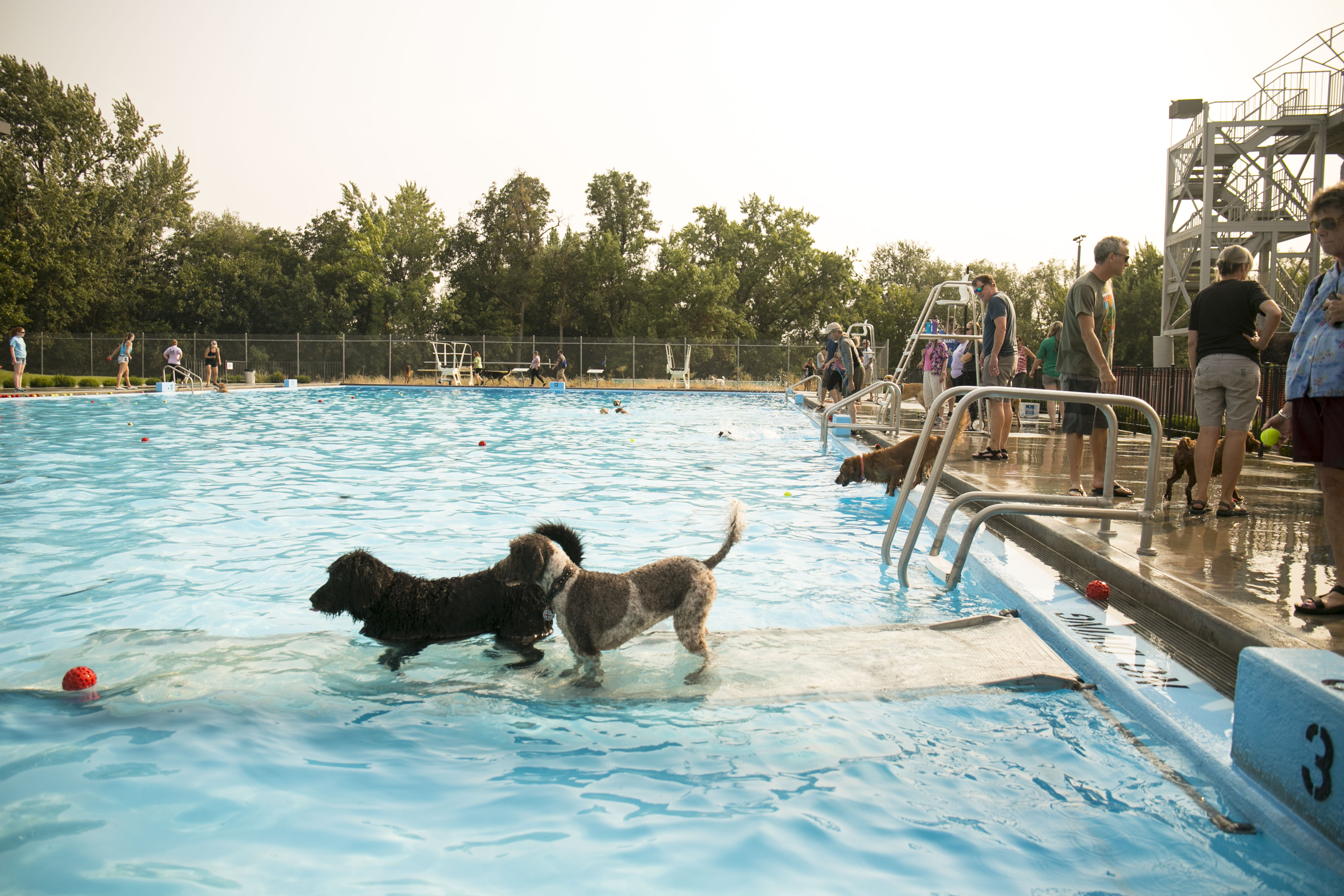 "Dogs took over{ }the Natatorium pool Monday in Boise for the Annual ""See Spot Splash"" event. The splashing benefited{ }the Idaho Humane Society. (Kristen McPeek Photo)"