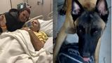 'I don't know how much time I have left': Vet's dying wish to reunite with service dog