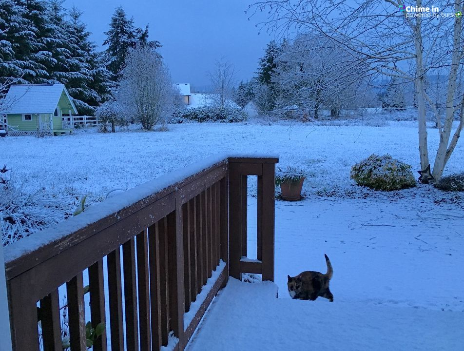 'Hockinson-my cat Gwennie heading back inside' - Anne-Marie Walden.
